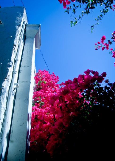 Alley full of flowers