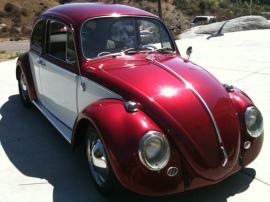 Beetle_