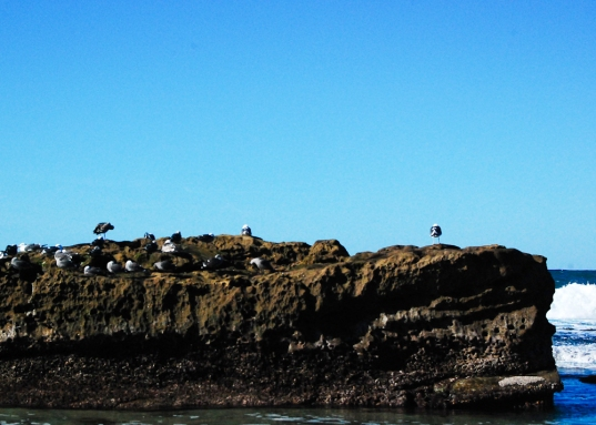Birds on a rock