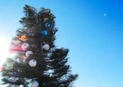 Christmas tree on Ocean Beach