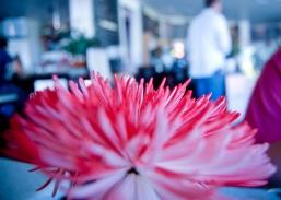 Creamery table flower