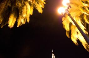 Palm Trees-1