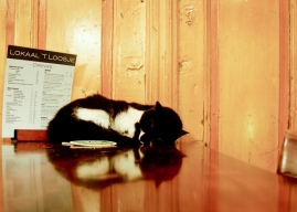 This cat lives in a bar.